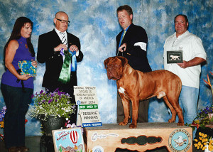 Reserve-Winners-Dog